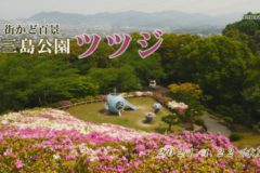 街かど百景:三島公園 ツツジ