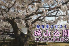 桜百景 城山公園 川之江吹奏楽団①
