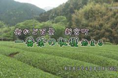 街かど百景:新宮町一番茶の収穫始まる