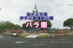 街かど:伊予三島運動公園 バラ園
