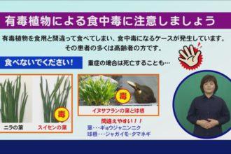 有毒植物による食中毒に注意しましょう