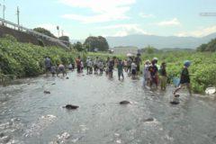 川の生きものを見つけよう! in金生川