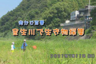 街かど:金生川で生き物採集